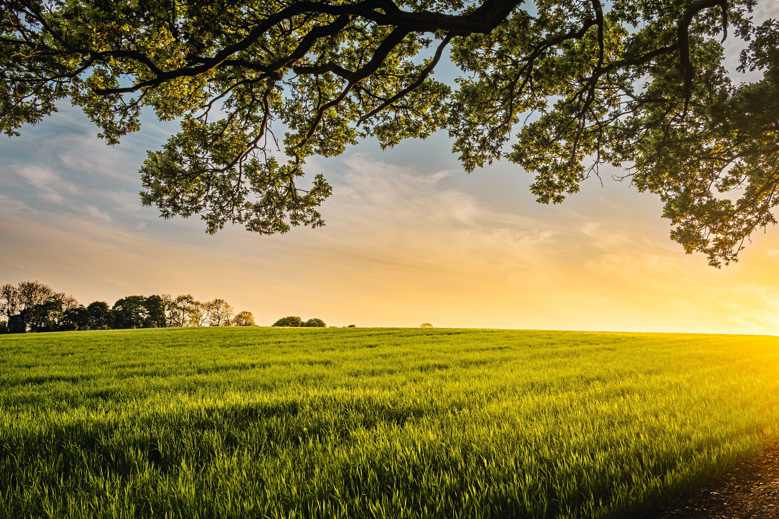 reaching net zero in agriculture
