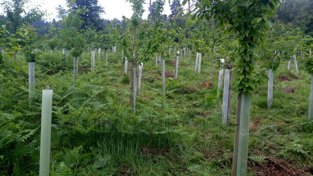 The NFU have this week launched a tree strategy