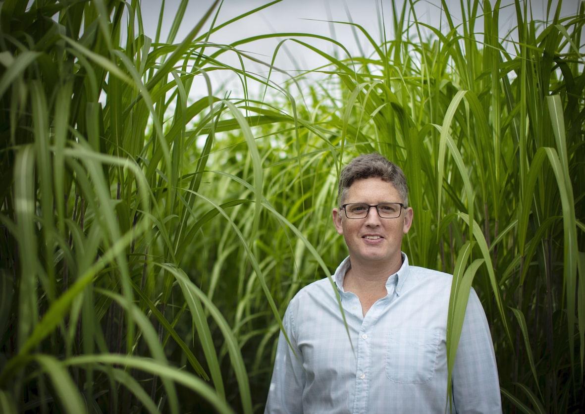 Miscanthus grower Adam Bradshaw