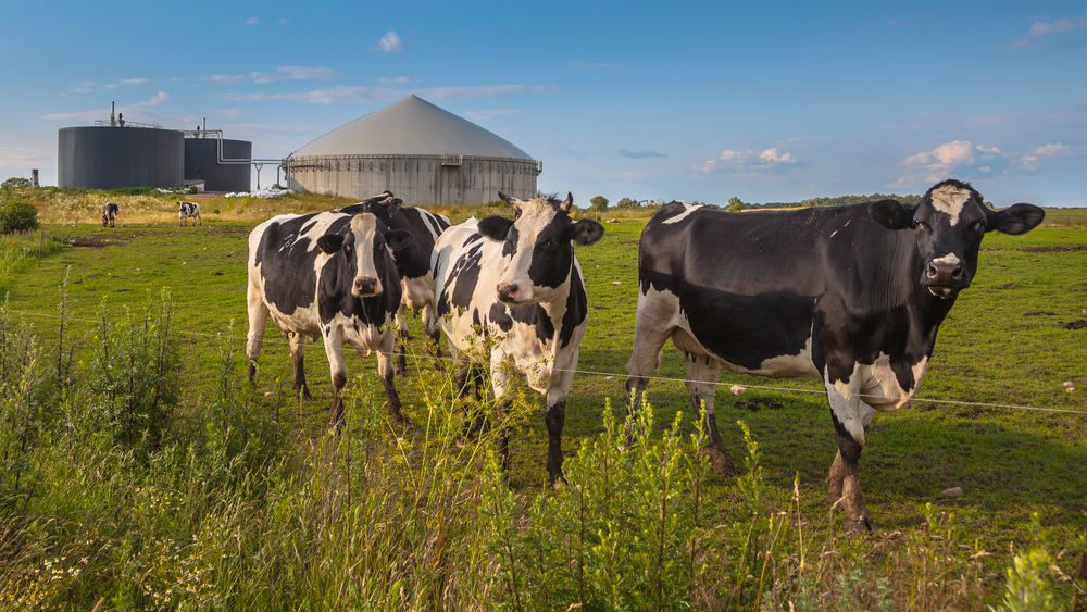 generating biogas from manure