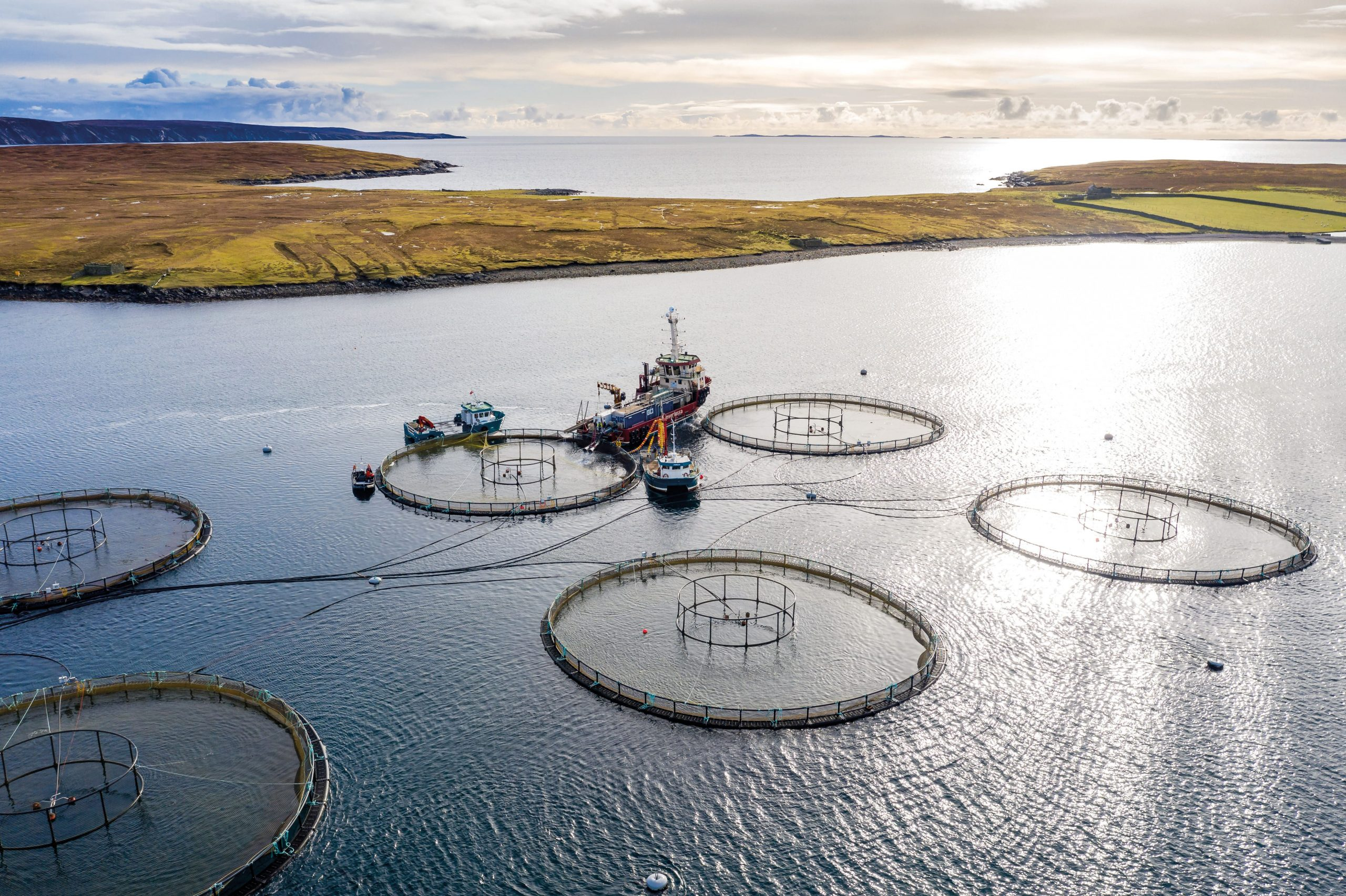 Aquaculture clean energy project